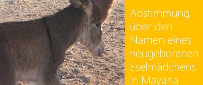 Ella, die neue Eselin in Namibia