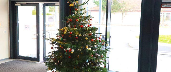 Weihnachtsbaum wurde aufgestellt