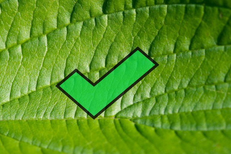 leaf-1992_1280-ok